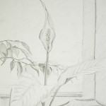 "Peace Lily in the Window Pencil on paper 9"" x 12"""