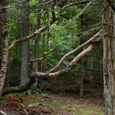 fallen tree, forest, moss, leaves, tree trunks