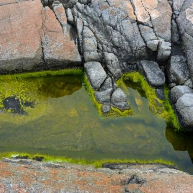 rocks, rock pattern, algae, green pool, puddle