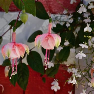 pink flowers in summer hanging basket