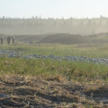 misty field, mist in the trees, walking in the mist